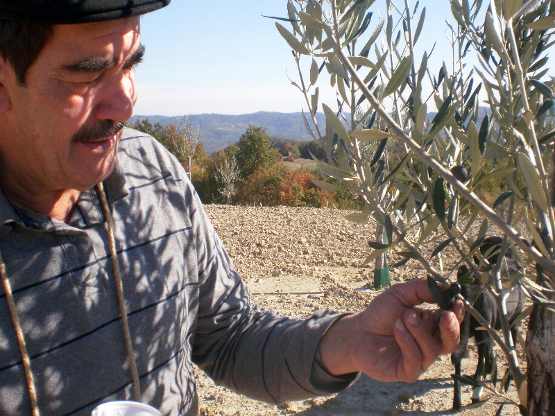 оливковое масло из Хорватии