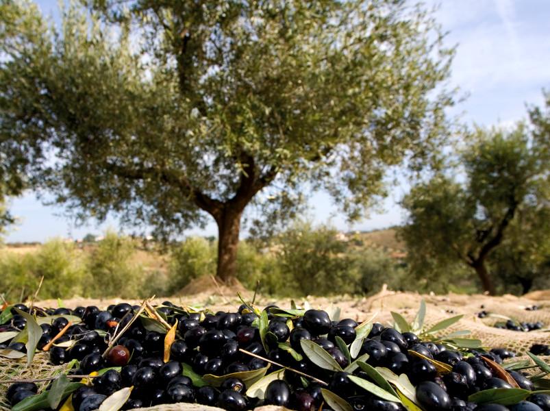 секреты греческих фермеров Часть 2