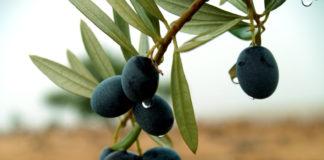 защитные свойства оливкового масла