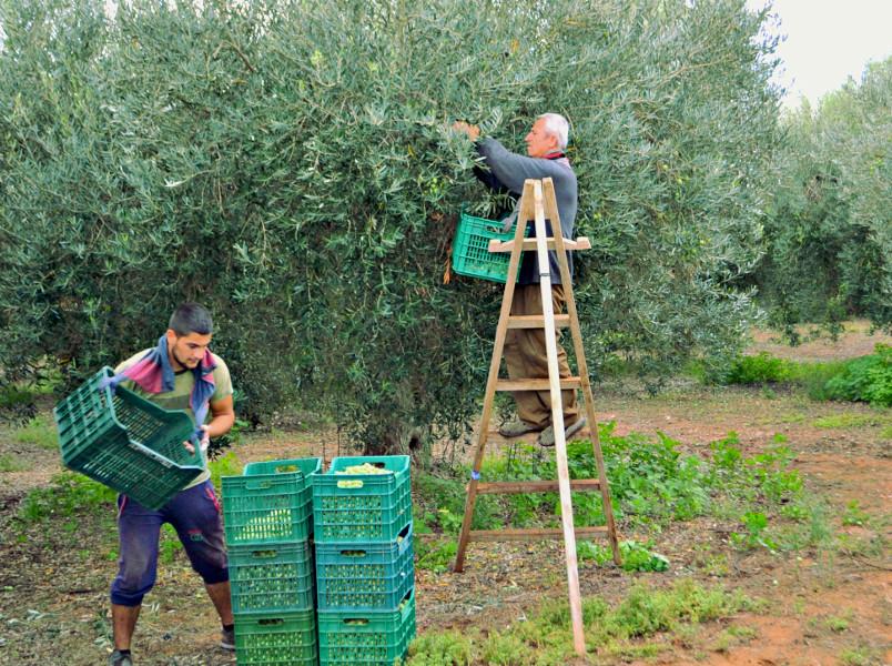 секреты греческих фермеров
