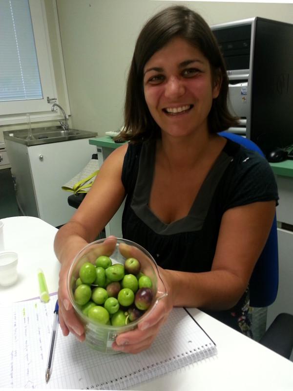 эксперт по оливковому маслу (часть первая)