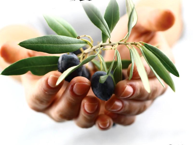 пять оливок в день для здоровья (часть первая)
