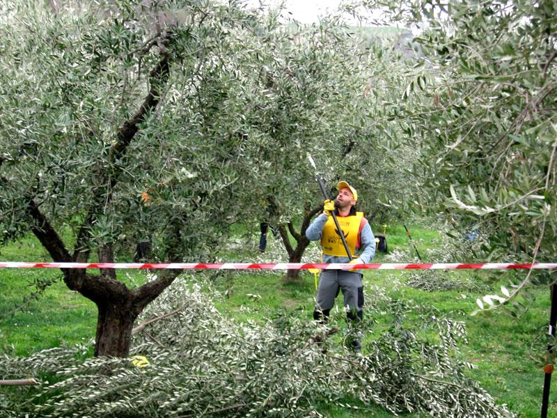 оливковое масло с характером