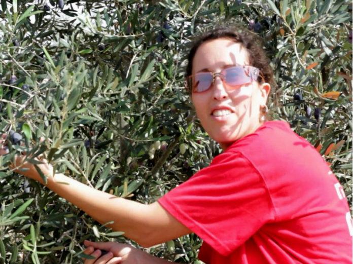 оливковое масло для арабо-израильского мира