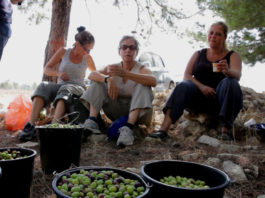 оливковое масло и арабо-израильский мир