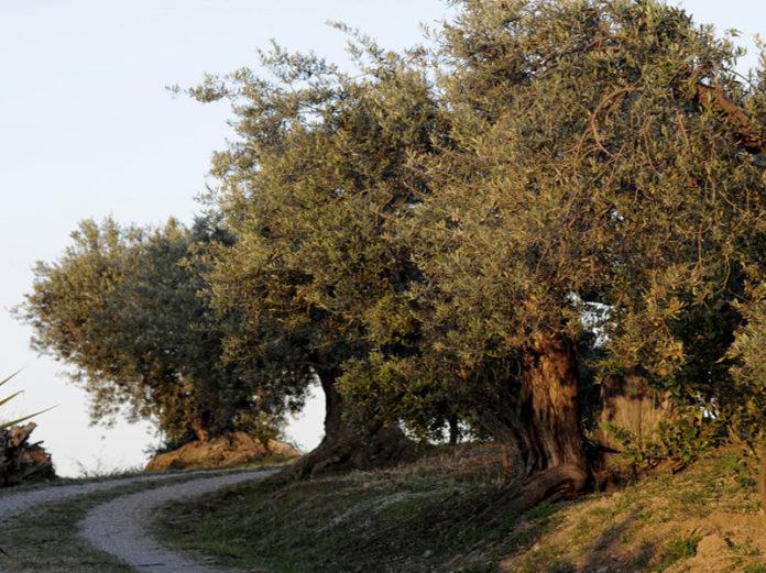 оптимизм итальянских фермеров (часть 2)