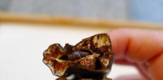 Кэроб или порошок из стручков рожкового дерева