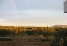 Экспорт тунисского оливкового масла