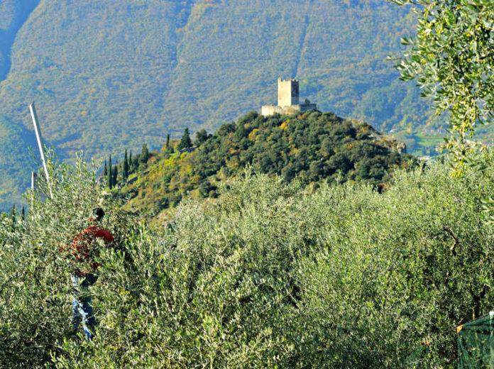 Территории оливкового масла