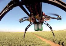стабильное производство оливкового масла