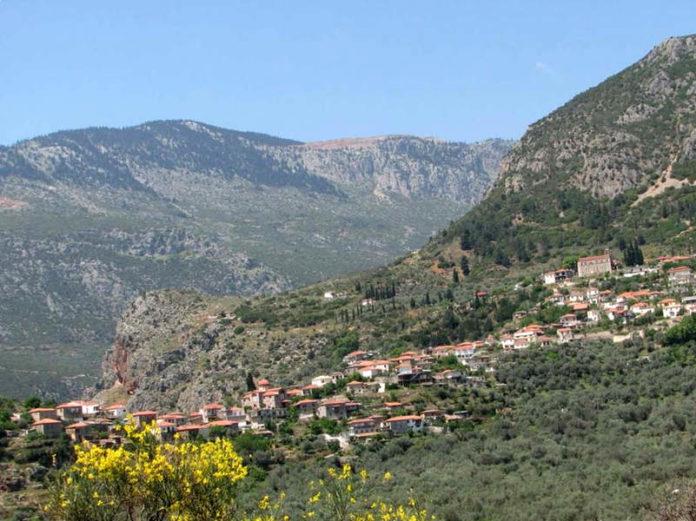 Почему молодые греки начинают производить оливковое масло