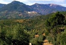 оливковое масло — «жидкое золото»