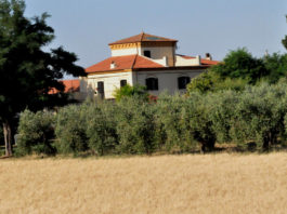 ферма оливкового масла