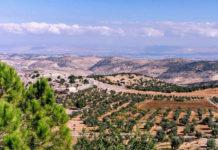Оливковый туризм