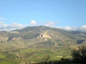 Итальянские производители оливкового масла