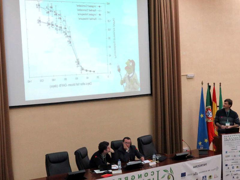 Производители оливкового масла Италии