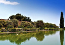 Высококачественное оливковое масло
