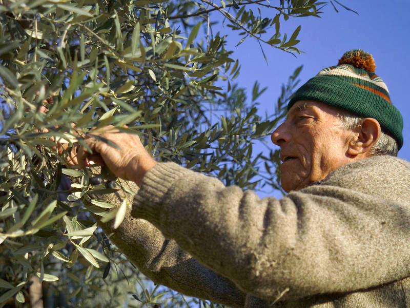 Оливковое масло холодного отжима