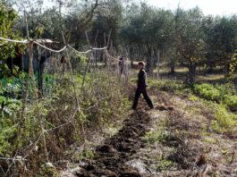 Изумительное оливковое масло