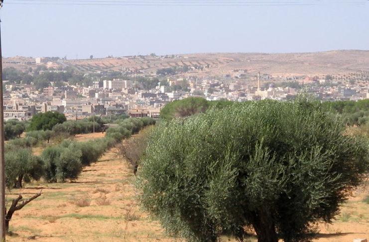 Оливковое масло из Ливии