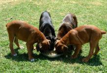 Оливковое масло для собак