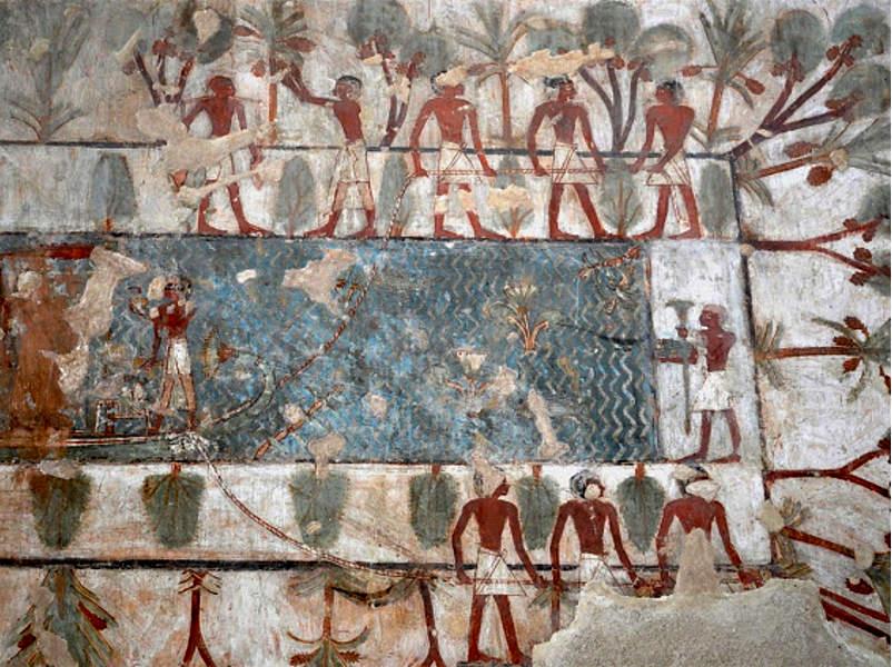 оливковое масло Египта