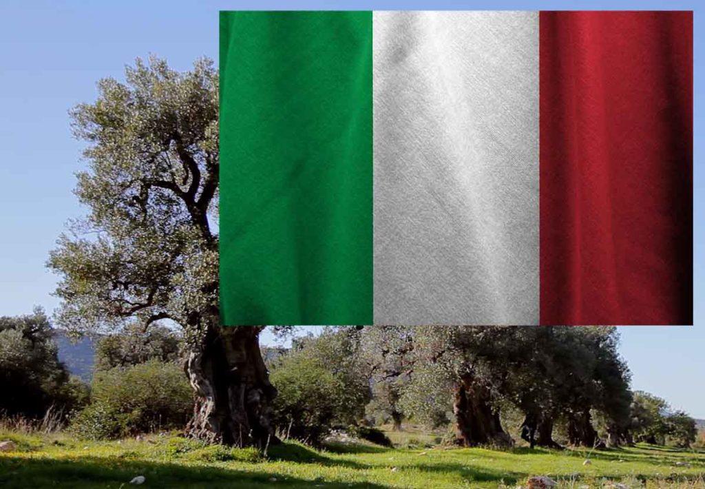 оливковые деревья в Италии